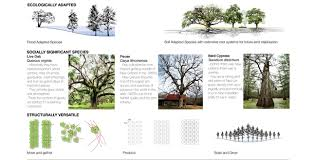 asla 2011 student awards big tree new big easy using the