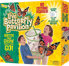 home environment design group paul wilsher butterfly garden kit 28 free butterfly garden starter packet set