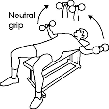 Flat Db Bench 19 Best Tricep And Chest Images On Pinterest Health Fitness Arm