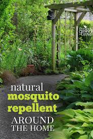 natural mosquito repellents natural mosquito repellent around the home five spot green living