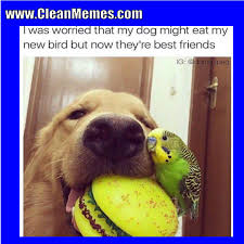 Clean Animal Memes - pin by aldiejo on aww pinterest animal pet life and dog