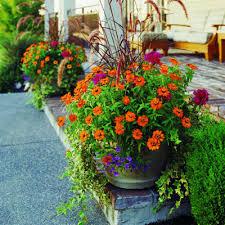 Container Gardening Ideas Container Gardening Ideas For Front Yard 191 Hostelgarden Net