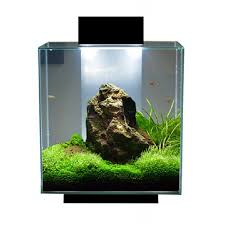 fluval edge 18 watt ultrabrite led system upgrade planted tank