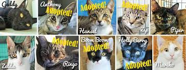 Good Luck Cat Meme - good luck cat cafe updated their cover good luck cat cafe