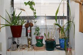 ode to kitchen windowsill plants good to grow