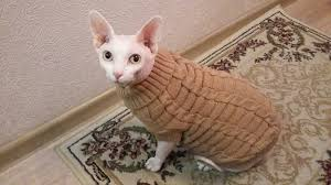 sphynx sweaters spagetti color warm autumn winter cat sweater pet jumper