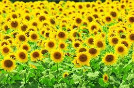 imagenes flores bellisimas flores bellísimas y variadas en 28 imágenes gratis imágenesflores com