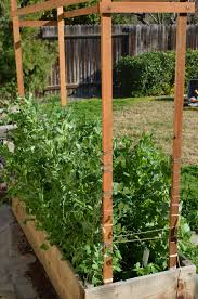 how to build a pea bean trellis the tasty alternative
