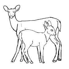 100 deer hunting coloring pages jaguar coloring pages archives