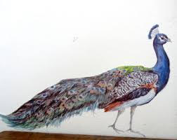 peacock wall decor etsy