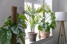 Deko Fensterbank Schlafzimmer Dekoration Fensterbank Pflanzen 4