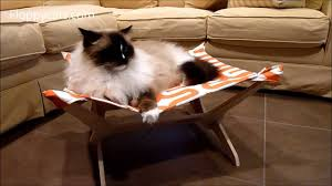 Trixie Cat Hammock by Ragdoll Cats Review Peach Industries Kitty Lounger The Ultimate