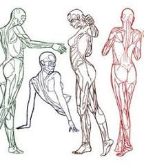 Human Anatomy And Physiology Case Studies Anatomy And Physiology Interactive Website Case Studies Study