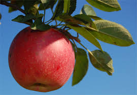 Best Fruit Trees For North Carolina - century farm orchards apple tree nursery