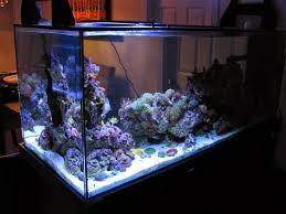 Marine Led Strip Lights by Current Usa Orbit Marine Led Aquarium Light Product Review