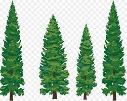 white pine tree eastern white pine tree clip pine tree png