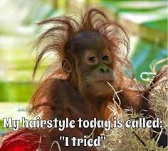 Bad Hair Day Meme - 68 best funny monkeys images on pinterest funny pics funny images