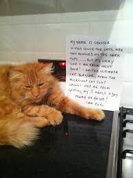 funny door stops cat friday cat shaming cat confessions pinterest friday cat