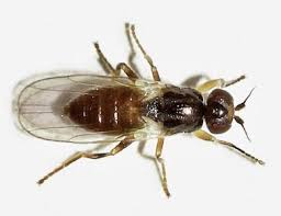 Getting Rid Of Flies In Backyard 30 Ways To Get Rid Of Gnats Inside And Outside The House