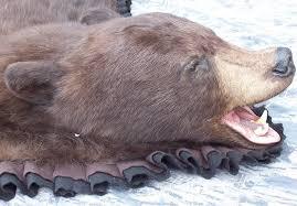 Taxidermy Bear Rug Chocolate Phase Black Bear Rug Animals Pinterest Taxidermy