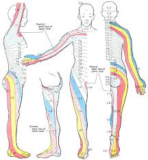 Foot Pain Map Dermatome Map Overview Chart Anatomy U0026 Clinical Significance