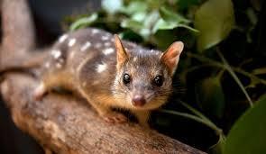 imagenes animales australia en australia se ha propuesto un plan para permitir la tenencia de