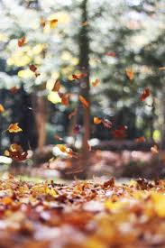 free images tree nature leaf fall flower food produce