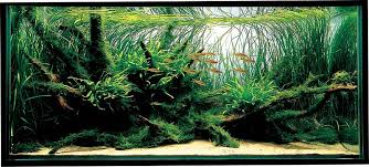 amano aquascape aquatic aquascaping aquarium