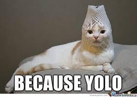 Random Cat Meme - awesome cat by anna alanka meme center