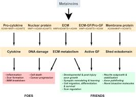 Nervous System Concept Map Metzincin Proteases And Their Inhibitors Foes Or Friends In