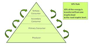 food chains food webs and energy pyramids texas gateway