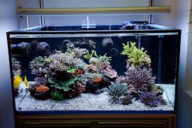 Aquascape Nj Aesthetics Of Aquascaping Part I Reefs Com