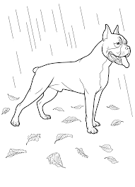 boxer puppies coloring sheets boxer downlload coloring pages