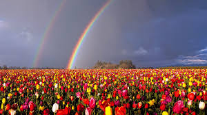 rainbows wallpapers page 3 field sky hills beauty rainbow clouds