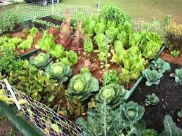 Vegetable Garden Layouts by Images Of Gardening Ideas Garden And Kitchen