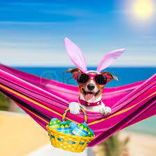 french bulldog dog on a hammock during easter holidays with