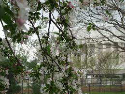 nasa decades of data show spring advancing faster than