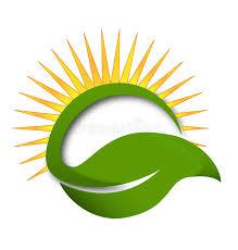 green leaf sun rays vector logo stock vector illustration of