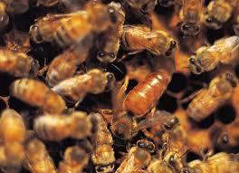 Raising Bees In Backyard by Beekeeping 101 Why Raise Honeybees The Old Farmer U0027s Almanac