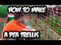 How To Make Trellis For Peas How To Make A Pea Trellis For Climbing And Growth Organic