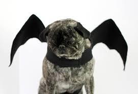 Gargoyle Costume Small Friendly Diy Dog Costumes