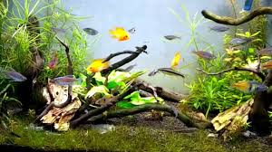 Aquascape Fish My Nature Aquascaping Fish Tank Youtube
