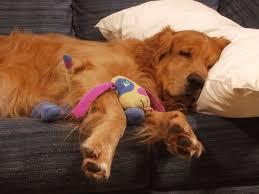 cuscini per dormire bene come scegliere il cuscino giusto i consigli per dormire bene