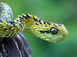 a green snake wallpapers saturday 03rd october 2015 01pm snake animals image galleries