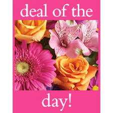 san antonio flowers deal of the day flowers san antonio san antonio flowers and more