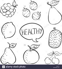 lychee fruit drawing doodle fruit hand draw collection stock vector art u0026 illustration