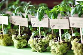 plant wedding favors outstanding plants for wedding favors wedding favors potted plants