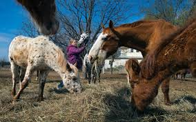 How To Tell If A Horse Is Blind As Battle Over Horse Slaughter Heats Up A Mother Daughter Team In