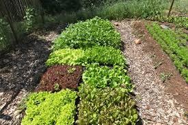 gardening layout lely vector robotic feeding system modern