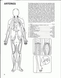 Anatomy And Physiology Coloring Workbook Chapter 6 Skeletal System Coloring Page Digestive System Coloring Page Free